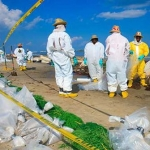 BP Employees Clean Up Crude Oil From A Gulf Of Mexico Beach